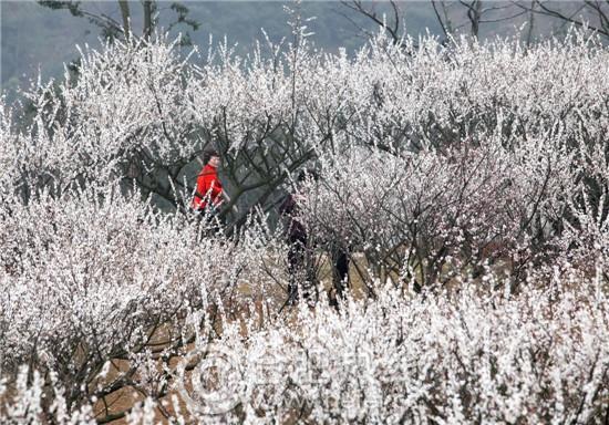 杭州超山风景名胜区