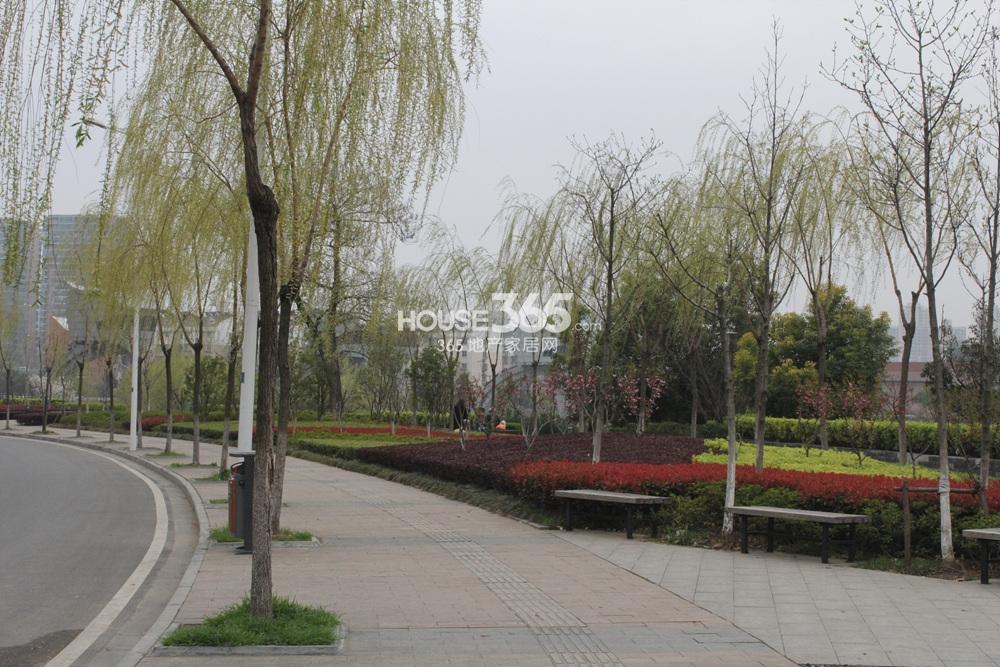 世茂外滩新城休闲公园实景图(3.25)