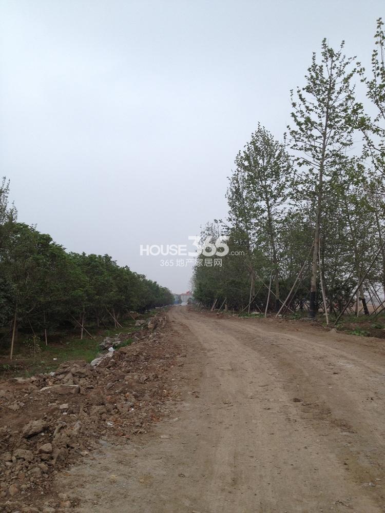 雅居乐滨江花园实景图(6.28)