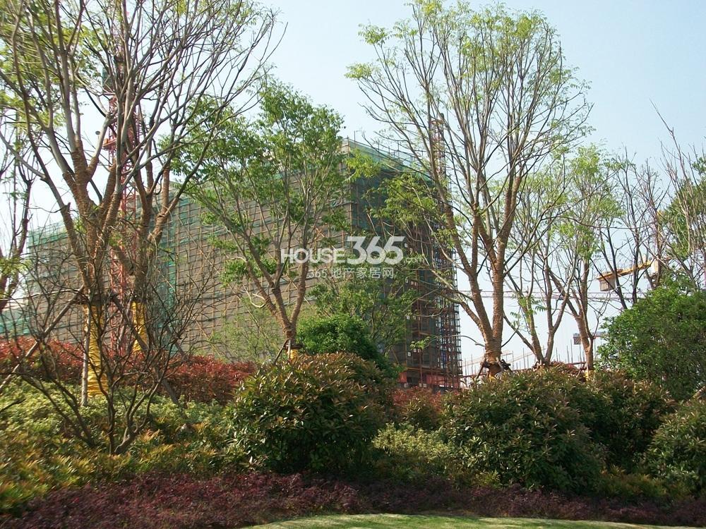 银亿东城售楼处旁掩盖在树荫中的楼栋(5.1)