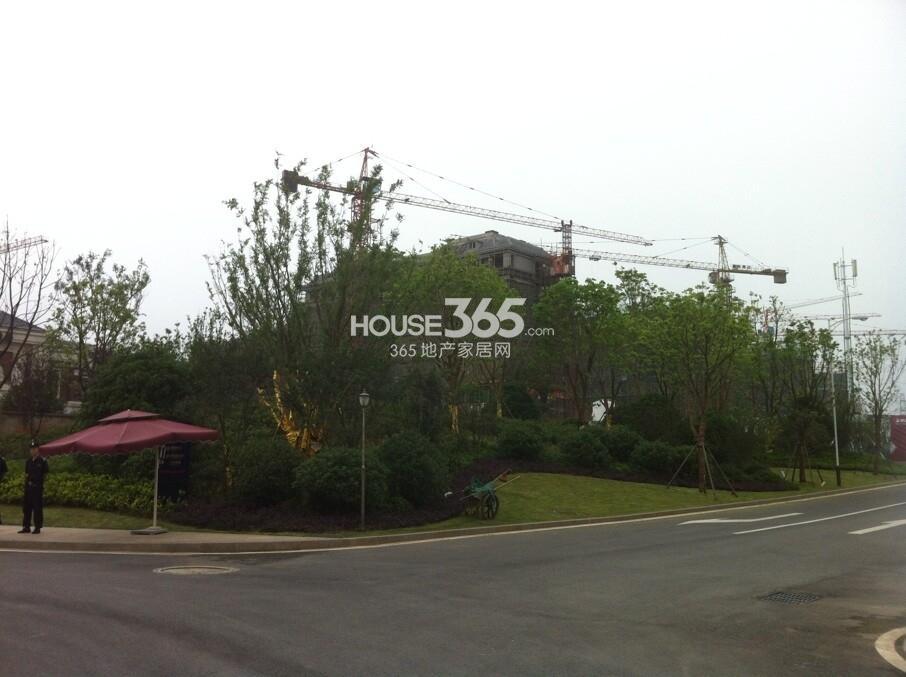 银亿东城小高层绿化实景图(6.15)