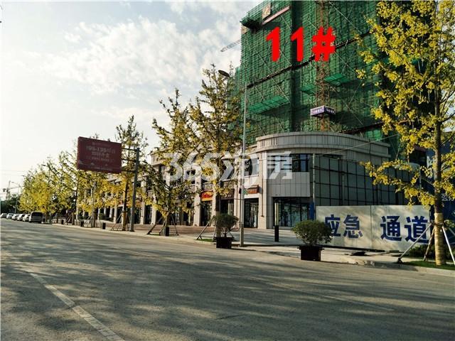 珍宝岛熙悦府11#楼实景图(9.25)