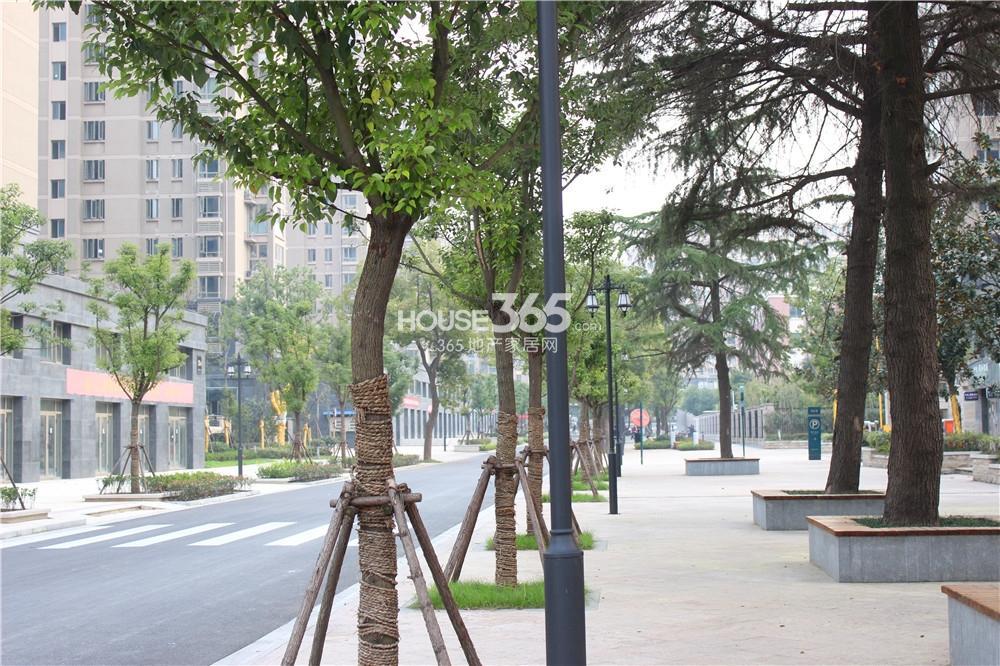 中电颐和家园前期的小区内部道路(11.13)