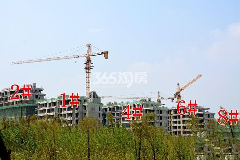 滨湖双玺1#2#4#6#8#项目进程实景图(10.30)