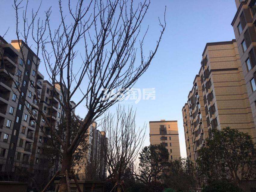 中建昆明澜庭社区绿化实景图(2018.3.21)