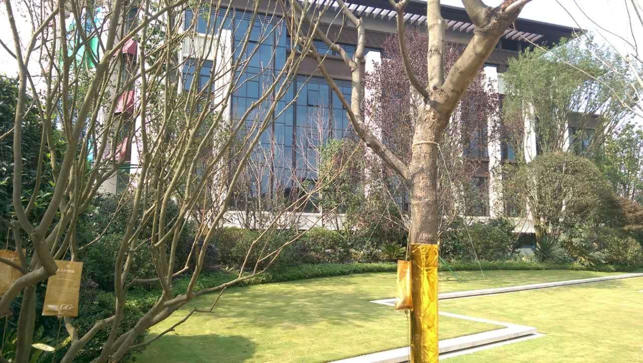鲁能城实景图