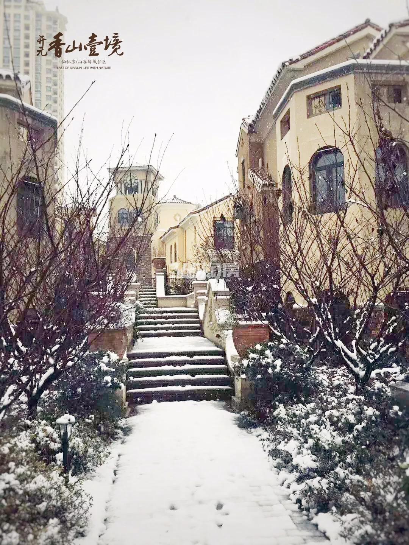 香山壹境雪景实景图(1.25)