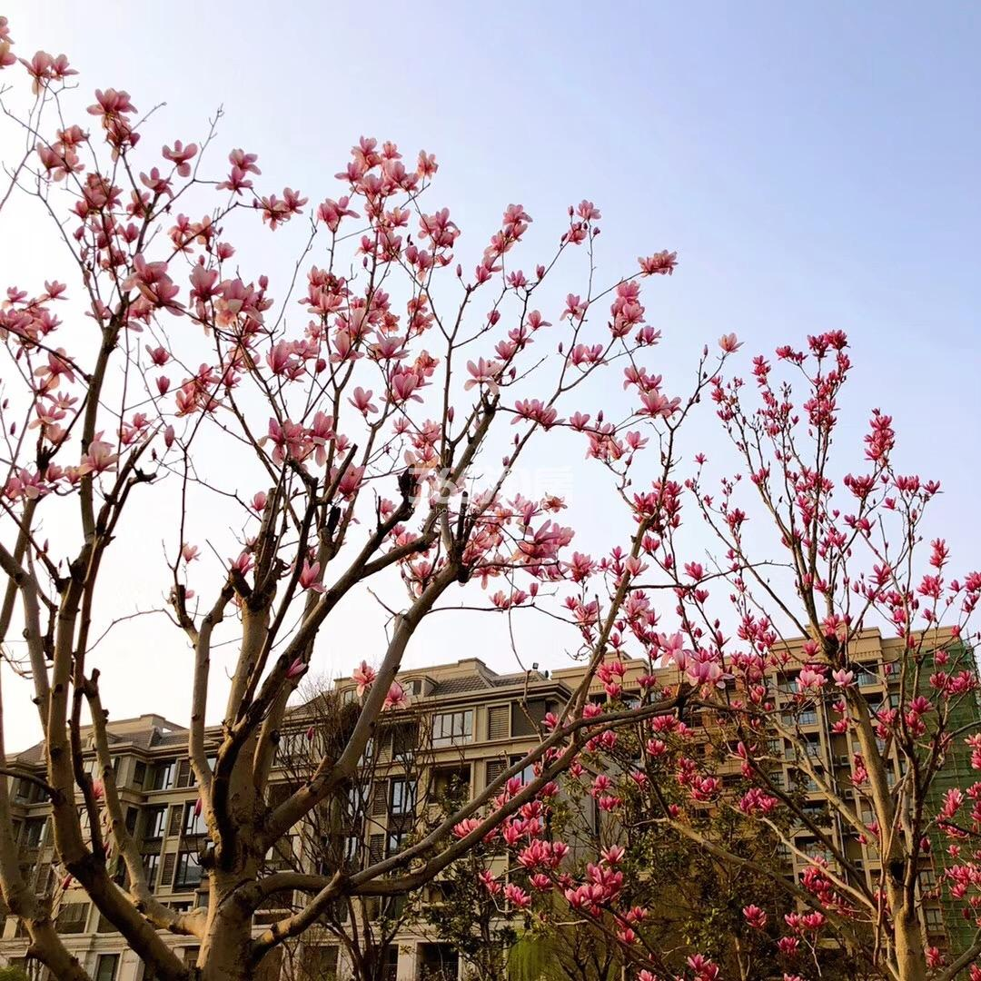 银亿东城周边景观实景图(3.27)