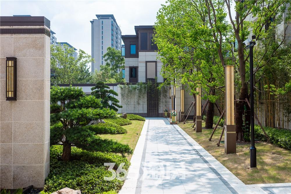伟星芜湖院子小区实景图(2020.7月摄)