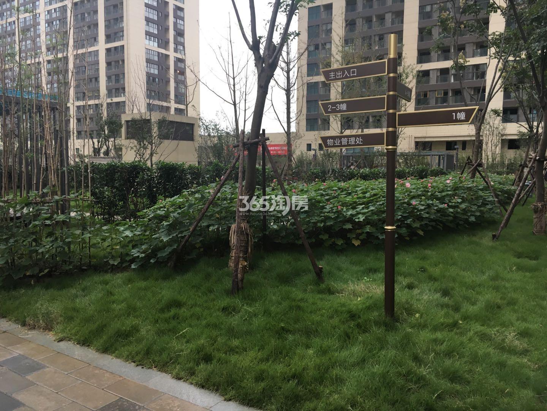 东方万汇城南区小区绿化实景图(11.15)