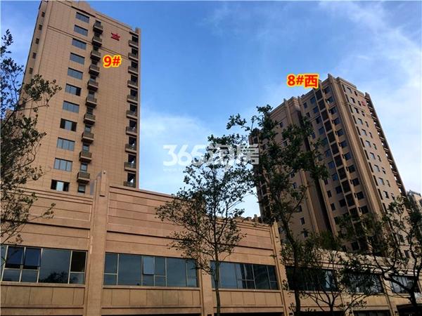 栖霞栖庭8#西、9#楼现房小高层实景图(2017.12摄)