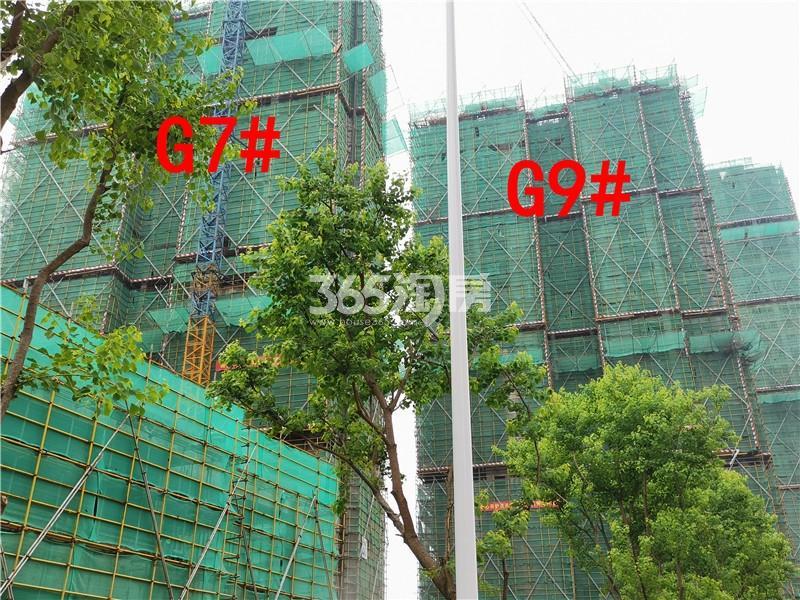 枫林学府在建G7、G9#楼实景图(7.26)