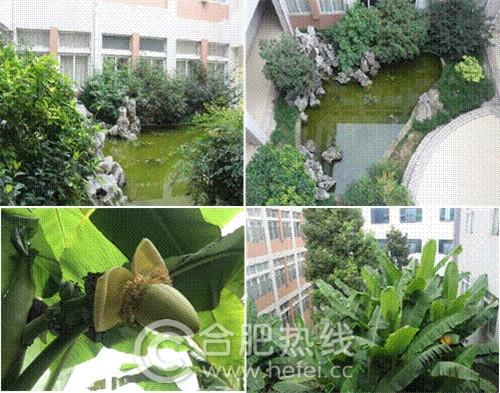 """""""模拟湿地生态系统-湿地小池塘""""与""""芭蕉林"""""""