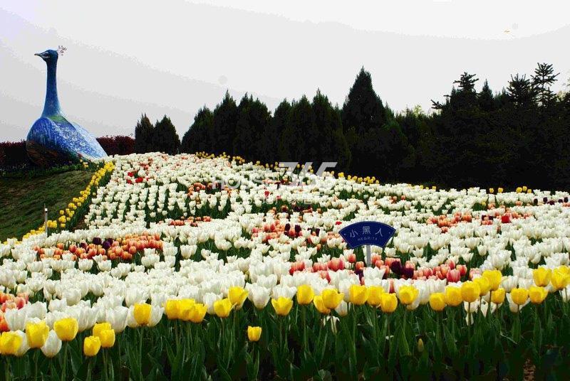 国润城周边-咸阳湖(2013年4月9日)
