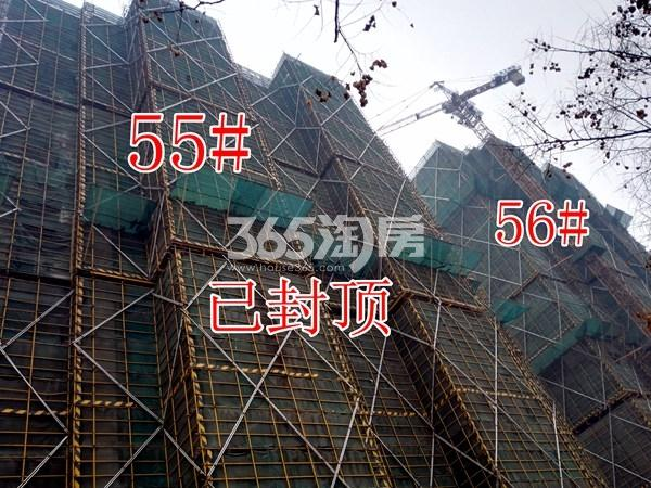 绿地工润和平壹号四期55#、56#工地实景图(1.16)