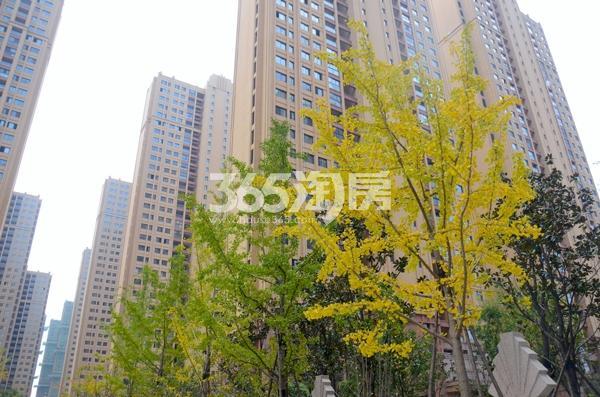 华南城紫荆名都小区环境实景图(2017.12.06)