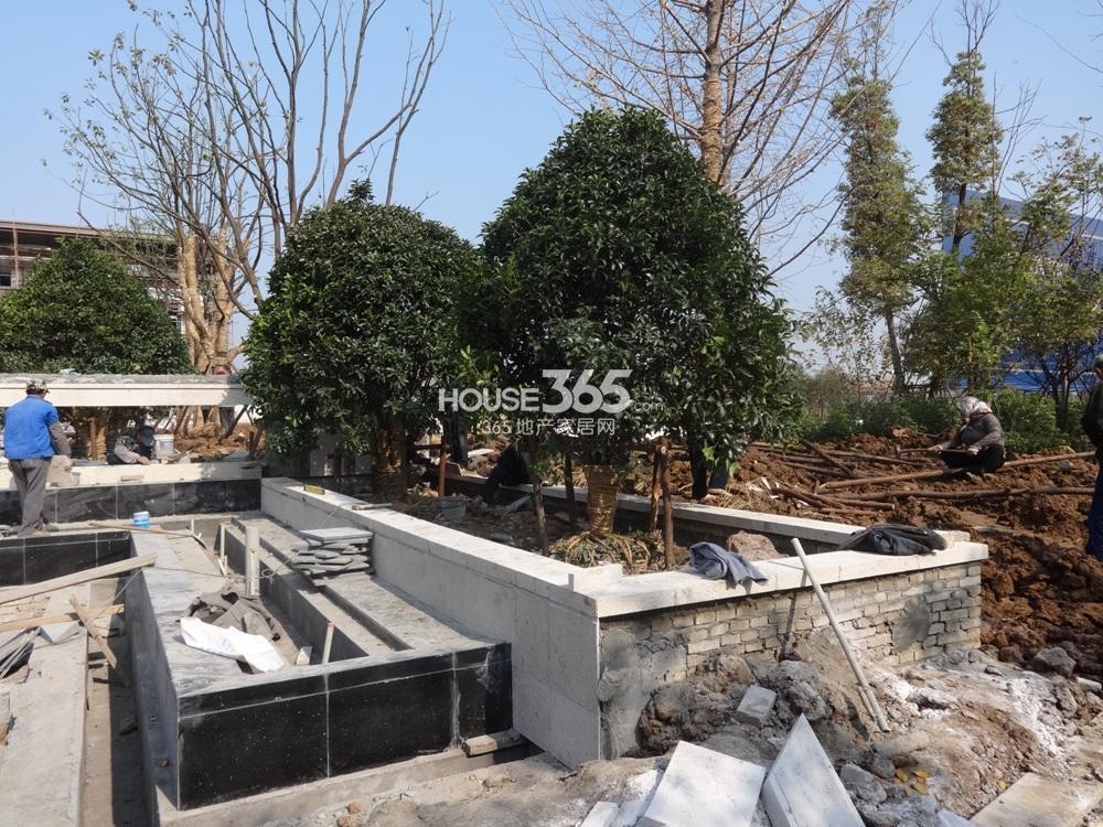 高科荣境二期会所绿化实景图(11.25)