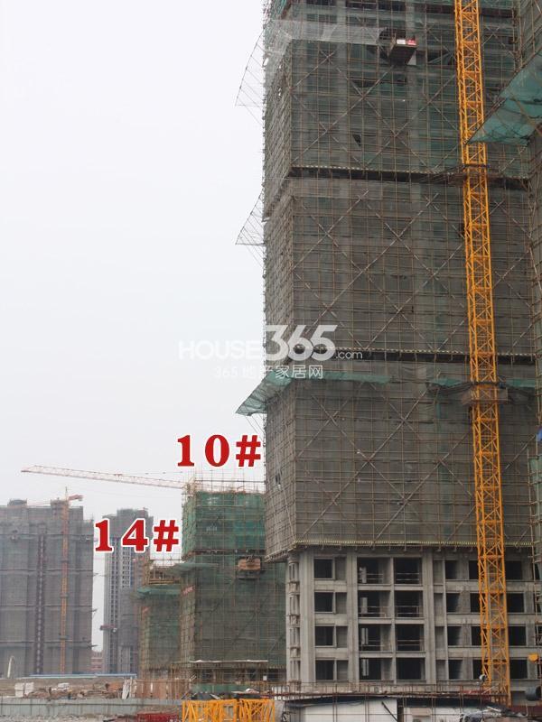 中海凤凰熙岸10、14#楼工程进度(2014.3.7)