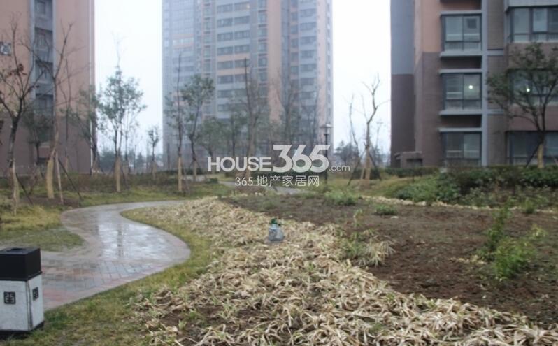 中铁尚都城小区绿化实景图(2014.2.26)