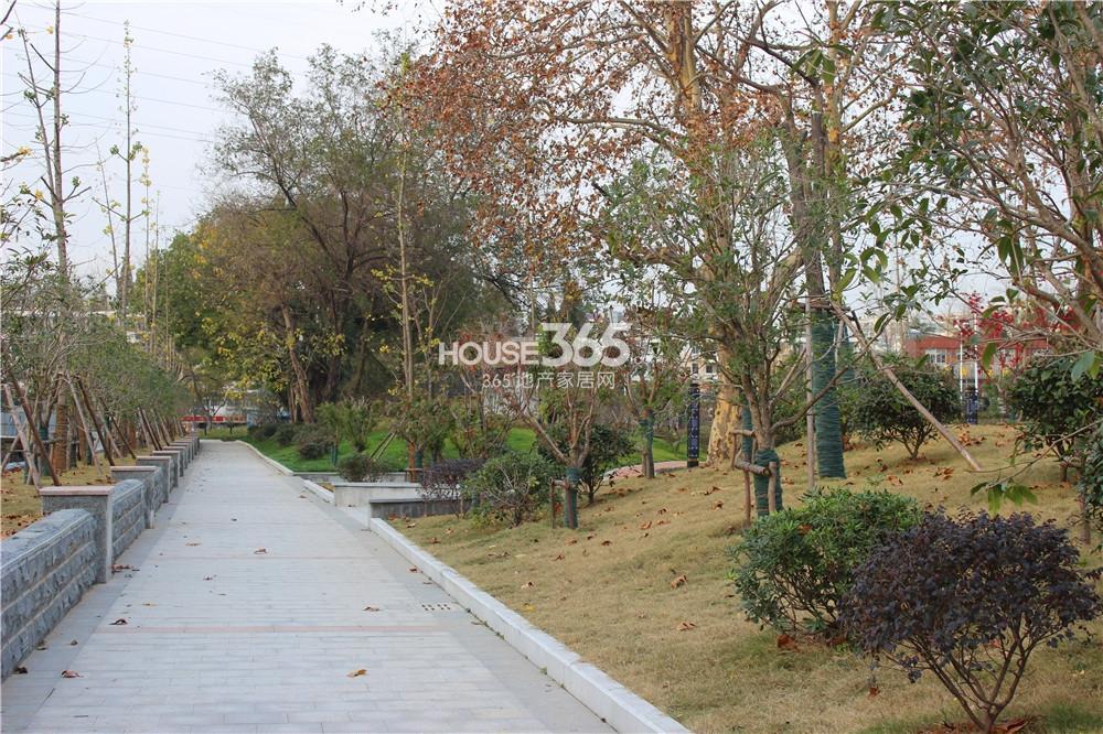 中电颐和府邸言和路一侧的绿化带(12.3)