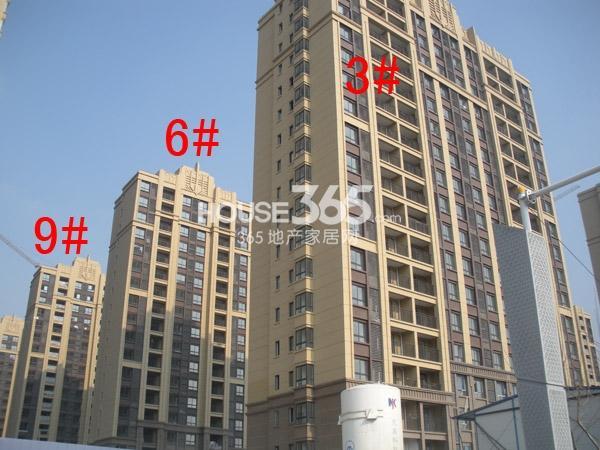 中海凤凰熙岸3#、6#、9#楼工程进度图(2014.12)