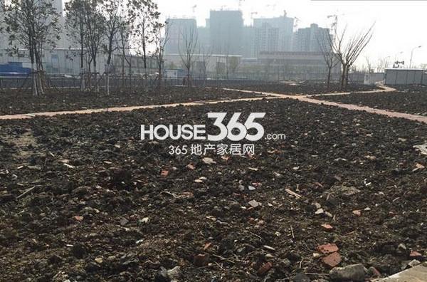苏宁悦城东北侧景观绿化打造中(2015.2 摄)