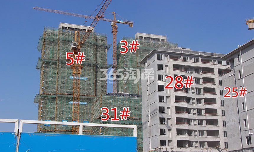 祥源金港湾3#、5#、25#、28#.31#楼工程进度(2018.1.29)