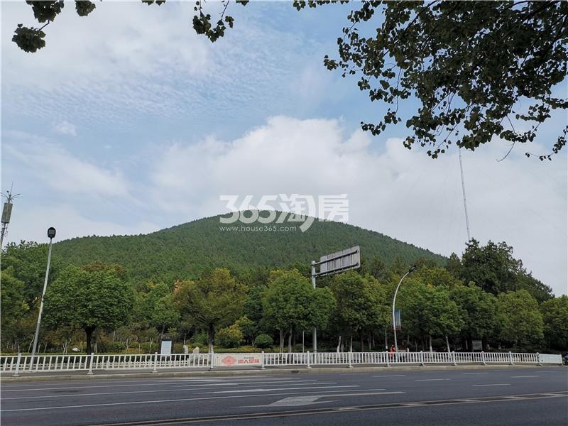 绿地理想城悦湖公馆项目北侧——泰山实景图(10.16)