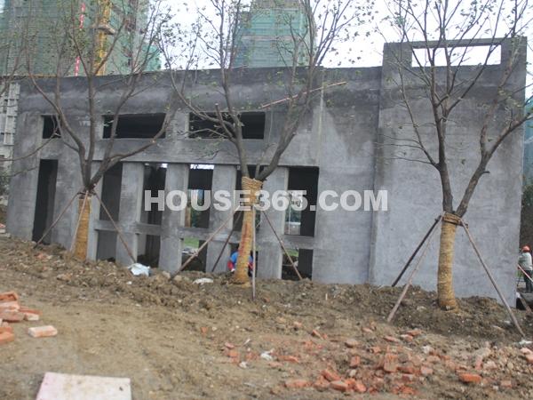 在建绿化(2011.12.8)