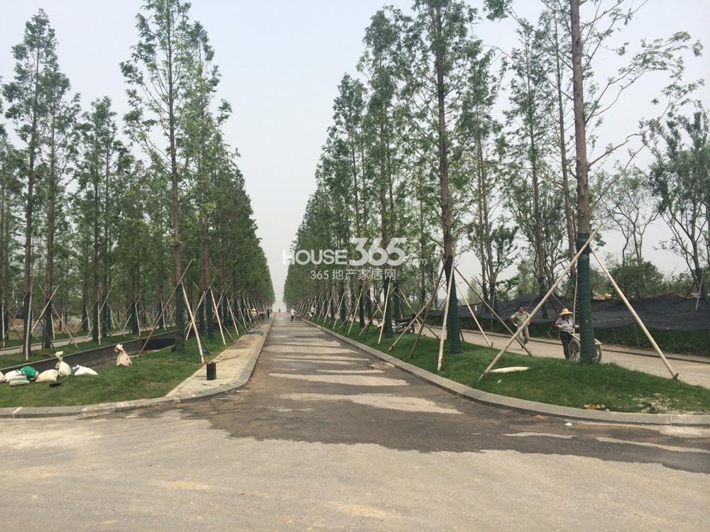 翠屏诚园临近上秦淮湿地景观(7.8)