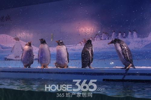 11月29日新华联梦想城企鹅来了