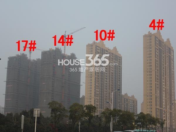 中海凤凰熙岸4#、10#、14#、17#工程进度图(2015.1)