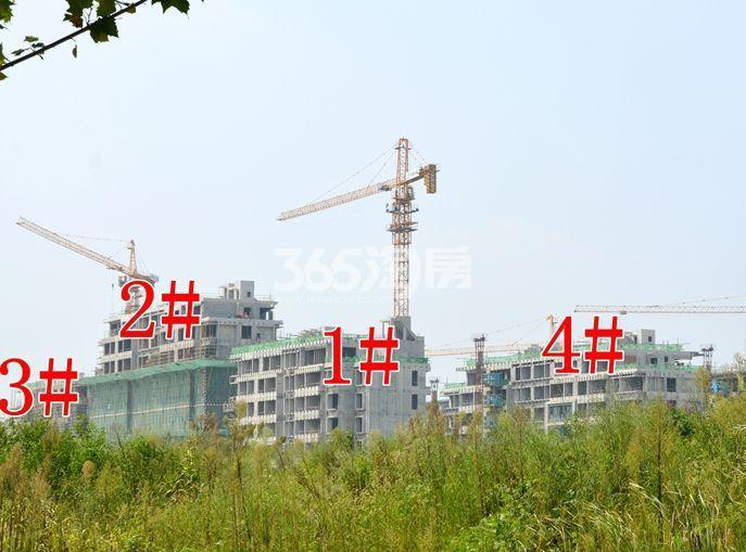 滨湖双玺1#2#3#4#项目进程实景图(10.30)