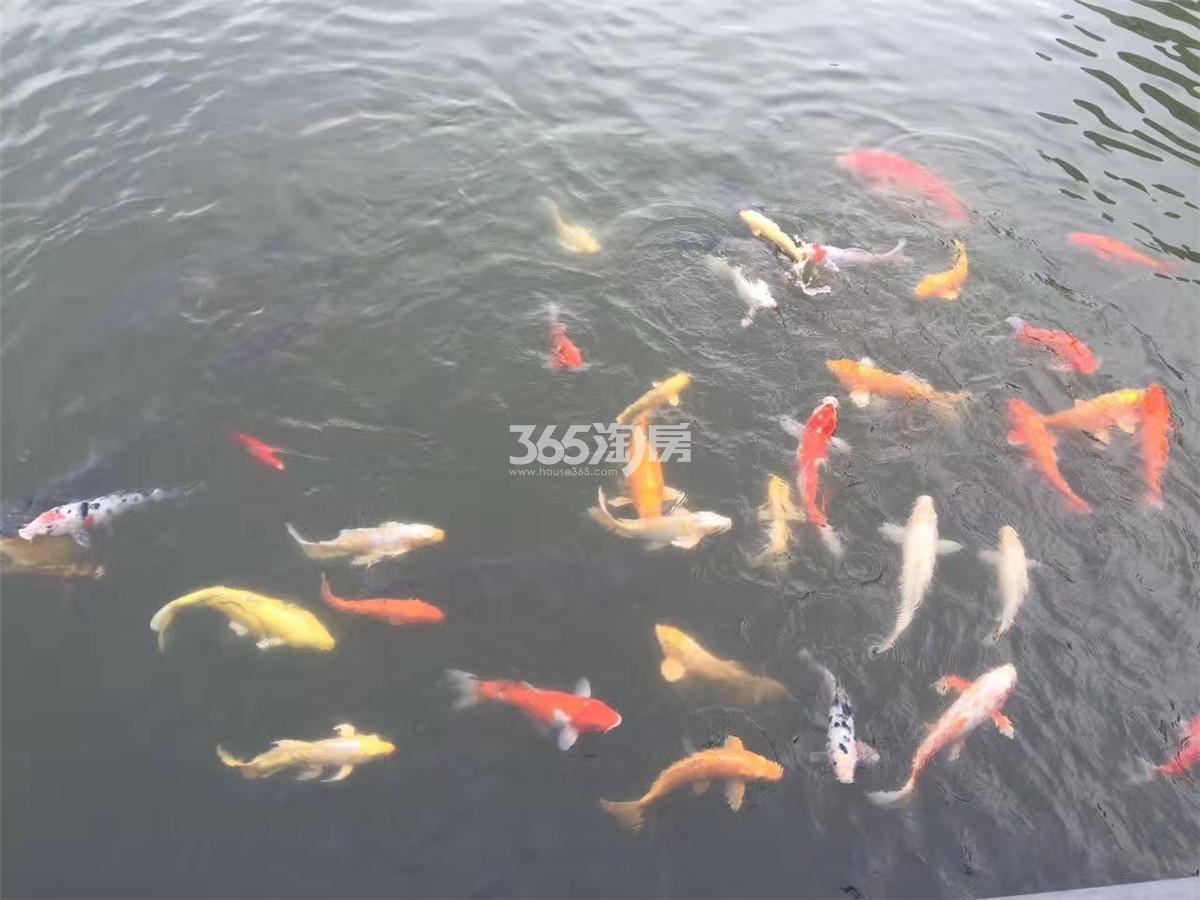 滟紫台小区水池实景图(6.22)