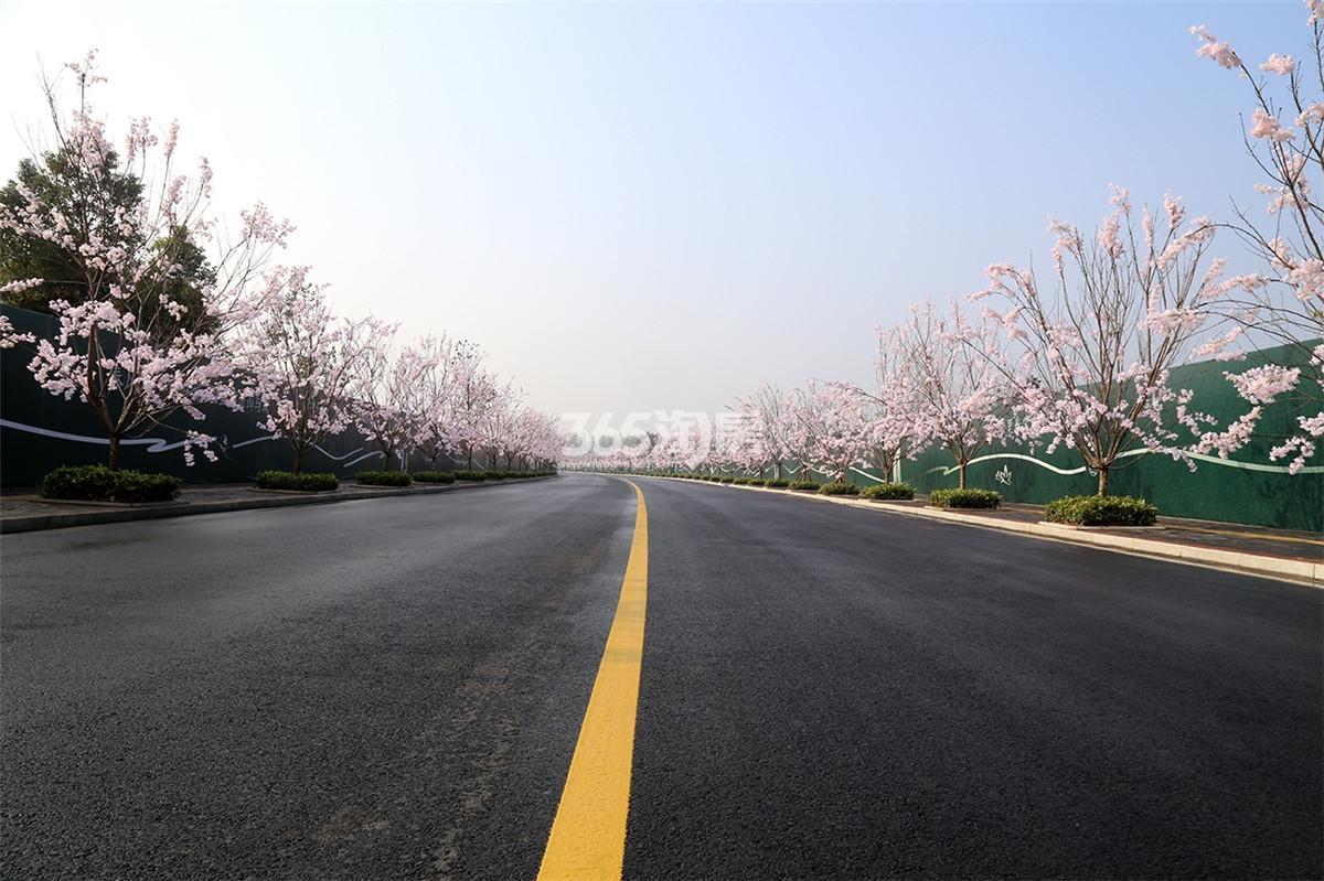 碧桂园十里春风实景图(12.14)
