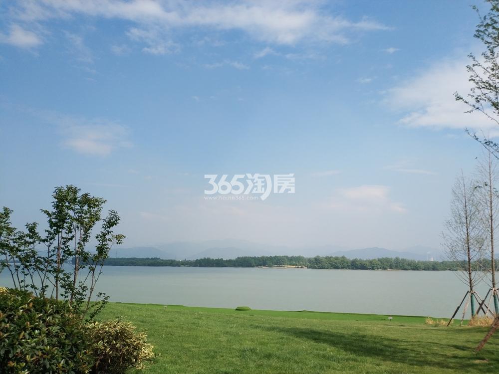 阳光城翡丽海岸富春江实景图 2018年5月摄