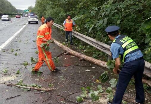 路政人员联合养护工人清理被大风挂到的树木