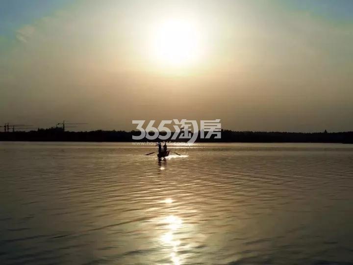 卧龙湖小镇香樟树实景图(12.21)