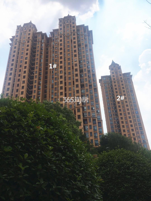 雅居乐滨江国际君悦组团1、2号楼实景图(8.23)