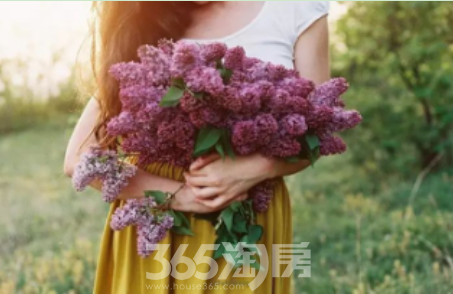 (国金壹号首府  365淘房   资讯中心)