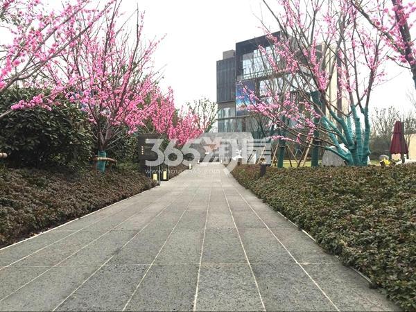 富力运河十号示范区实景图(2017.12 摄)