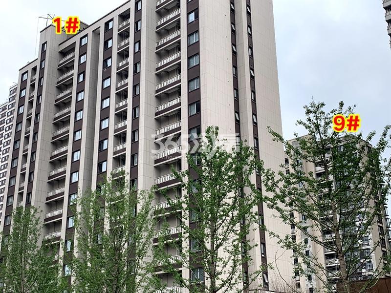 万科翡翠东方1#、9#楼工程实景(2020.6.30摄)