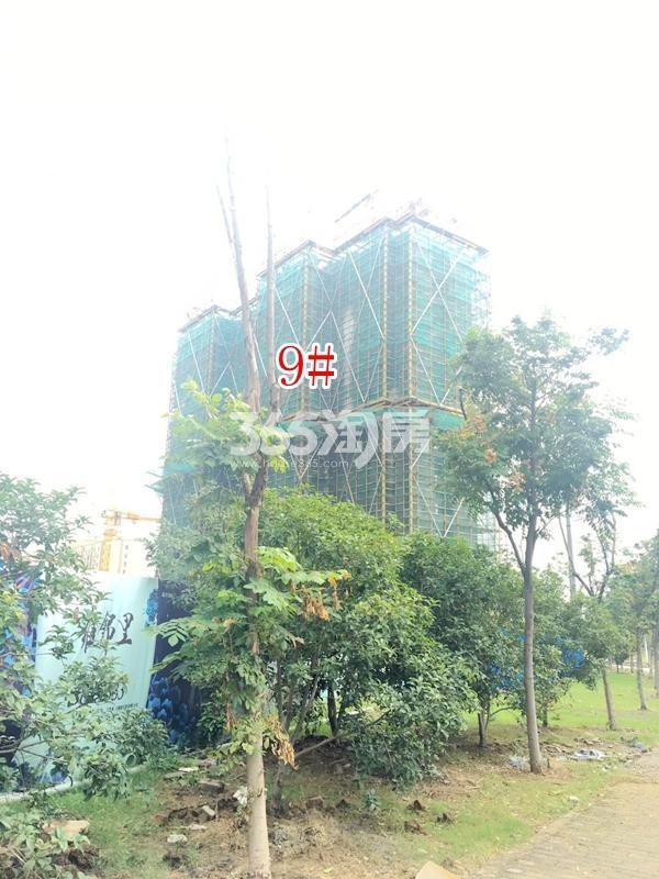 蓝光雍锦里高层9#楼实景图(2017.10 摄)