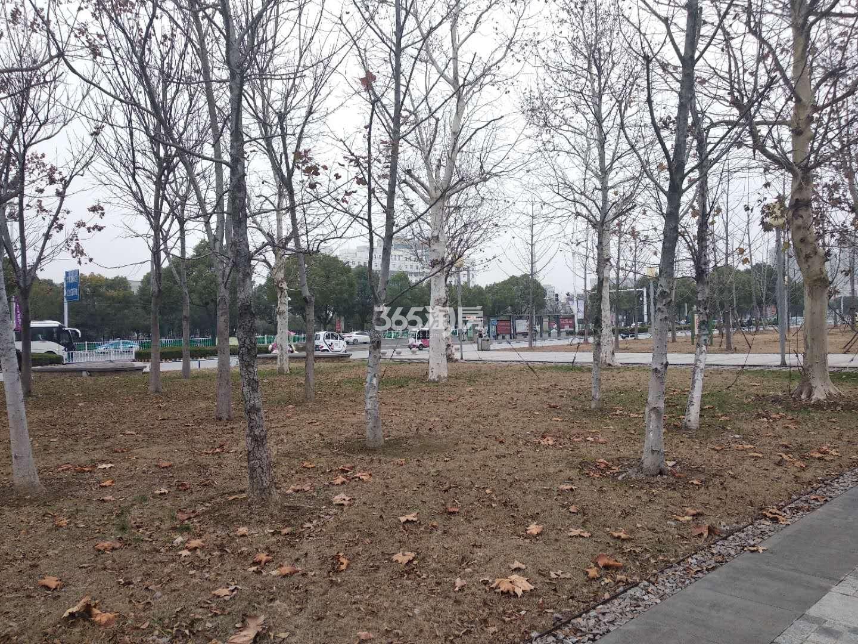 禹洲栖湖朗廷 周边公园实景 201901