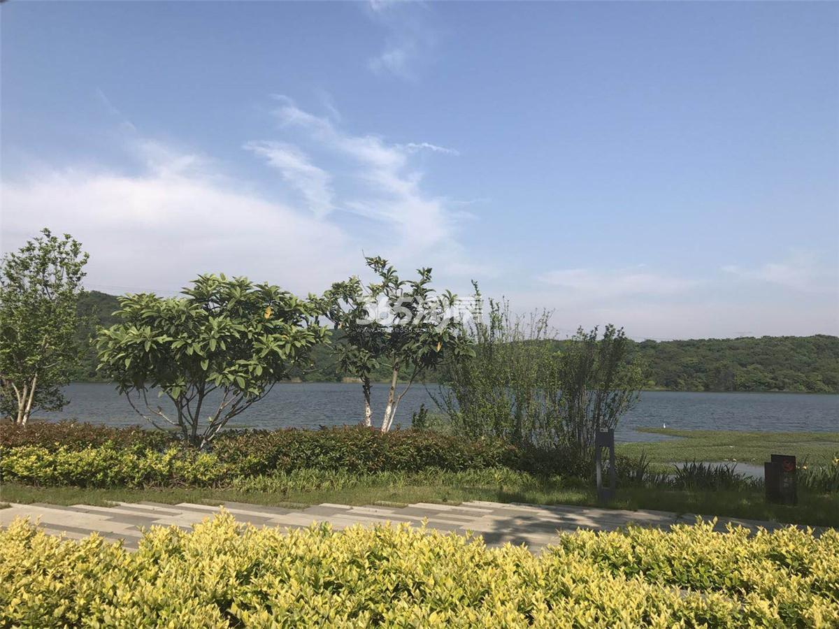 瑞安翠湖山小区实景(11.15)
