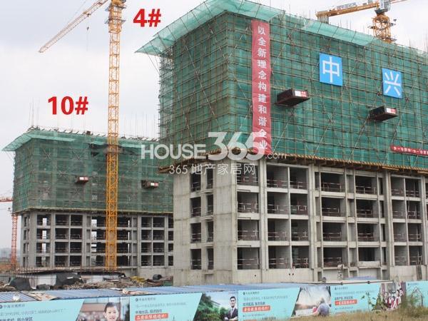 中海凤凰熙岸4、10#楼工程实景图(2013.10.25)
