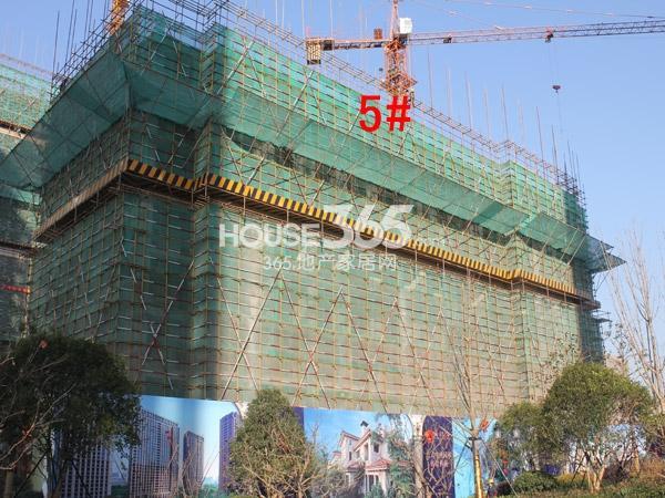 绿城玉兰广场5#楼工程进度图(2014.12)