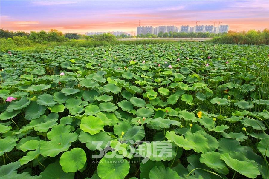 鸿瑞熙龙湾环境实景图(2018.8摄)