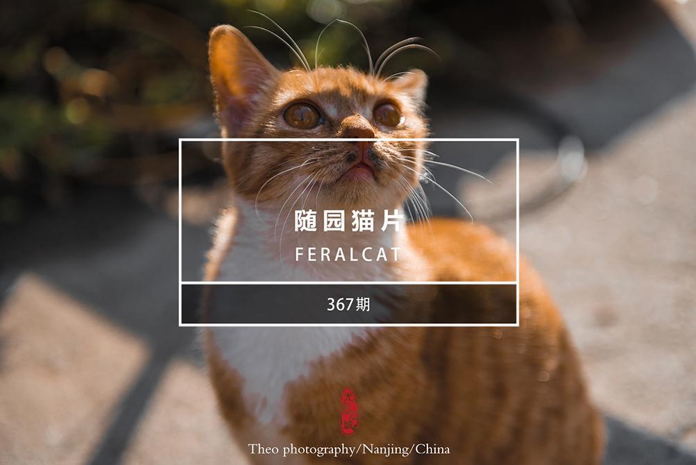 光影石城367:随园猫片