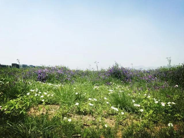 蓝光黑钻公馆附近配套中央公园实景图(7.2)